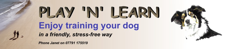 PlayN Learn Dog Training Hemel Hempstead Hertfordshire Herts